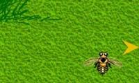 HoneyHunt