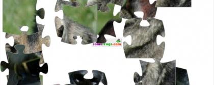 Dog Jigsaw Puzzle