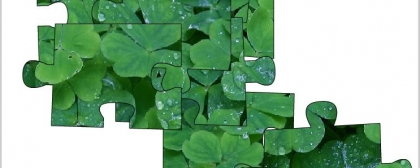 Jigsaw: clover