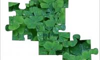 Jigsaw: clover