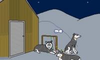 Der verschwundene Husky