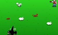 Plimptons Video Falconry
