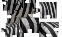 Jigsaw: Zebra Stripes